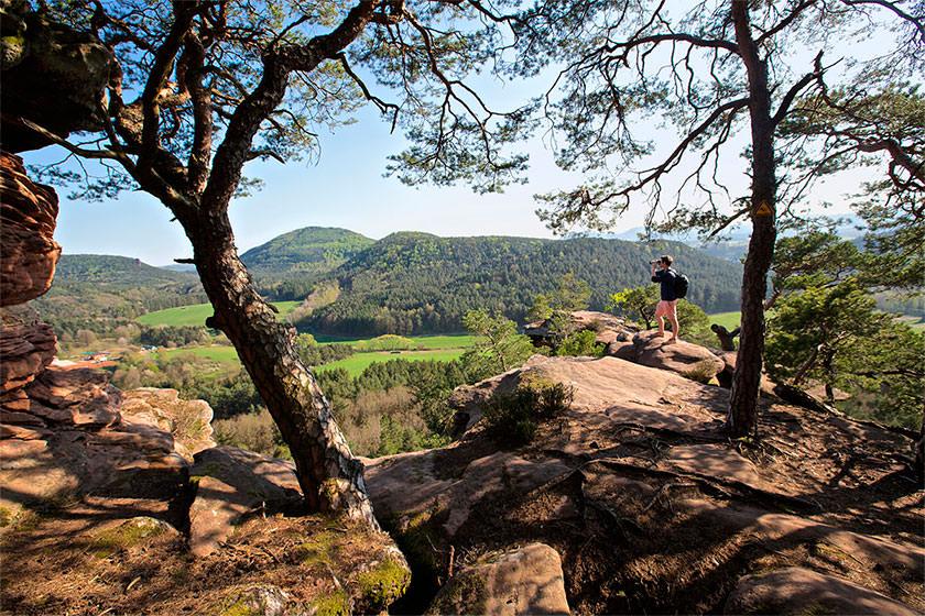 AUSSICHTSPUNKT – Blick auf den Pfälzerwald © diepfalz.de