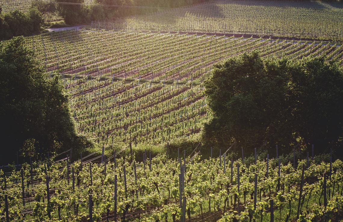 Besondere Weinlagen der Pfalz
