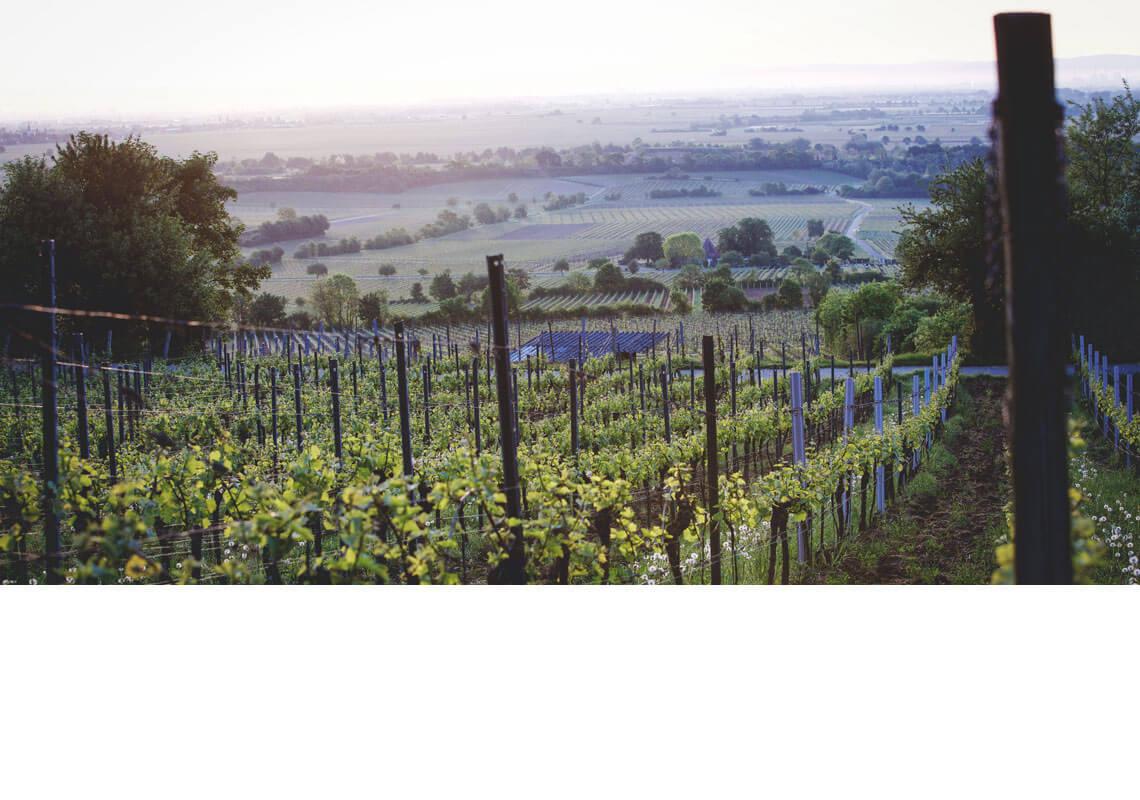 Weinlagen der Pfalz © gliglag.de